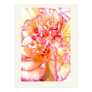 Rosa u. gelbe Ostern-Gartennelke jjhelene Postkarte