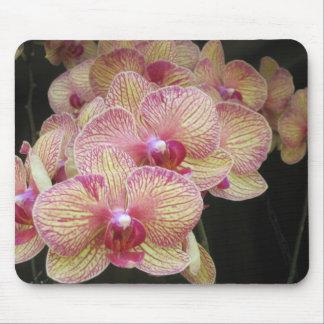Rosa und gelbe Motten-Orchidee Mousepad