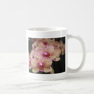 Rosa und gelbe Motten-Orchideen-Tasse Kaffeetasse