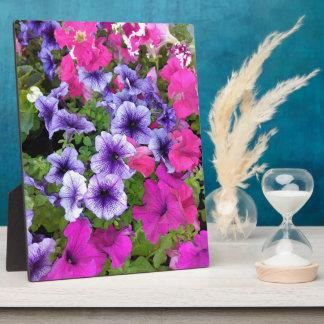 Rosa und lila Petunie-Blüte Fotoplatte