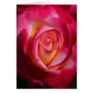 Rosa und Rote Rose mit gelben Höhepunkten Karte