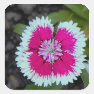 Rosa und weißes Blumen-Foto Quadratischer Aufkleber