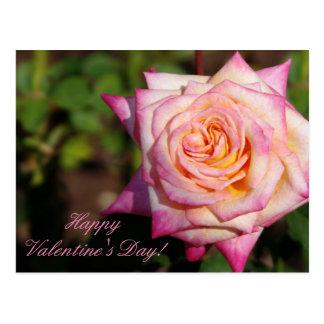 Rosa Valentine-Rose Postkarte
