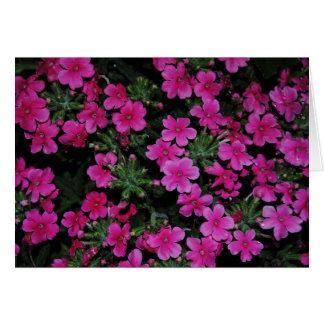 Rosa Verbene-Blumen-Karte Karte
