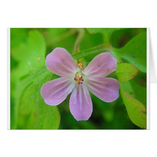 Rosa-weiss gestreifte Storchenschnabelblüte Karte
