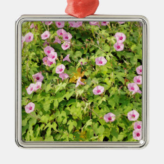 Rosa Winden Bush Quadratisches Silberfarbenes Ornament