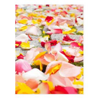 Rosarote und gelbe Rosen-Blumenblätter Postkarte