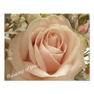 Rose couleur pêche photographies