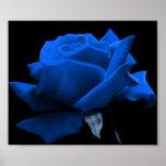 Rose de bleu affiche