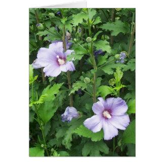 Rose der Sharon-Hibiskus-Blumen Grußkarte