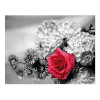 Rose rouge avec l'arrière - plan noir et blanc carte postale