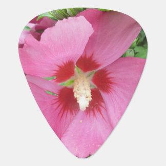 Rose Sharon rosarot Pick