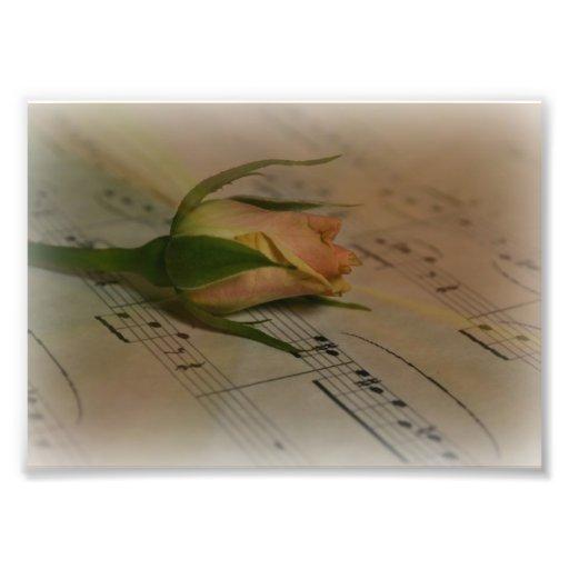 Rose und Musik Photographien