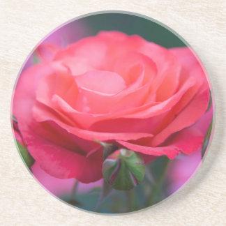 Rose vom Portland-Rosen-Garten Getränkeuntersetzer