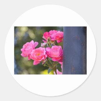 Rosen-Foto Runder Aufkleber