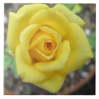 Rosen-Garten-Blumen-Minigelb Große Quadratische Fliese