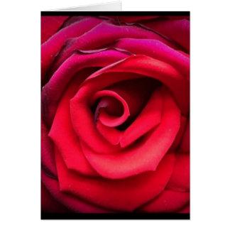 Rosen werden gelesen karte