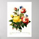 Roses par Pierre-Joseph Redouté Posters