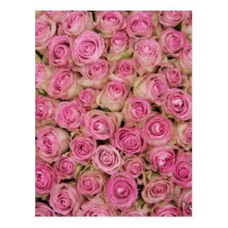 Roses roses de scintillement par TheRoseGarden Carte Postale