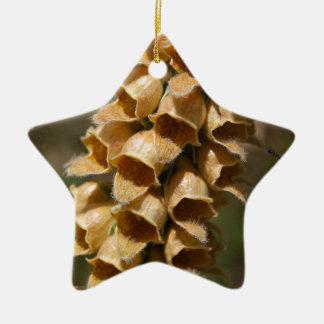 Rostige Fingerhut (Fingerhut ferruginea) Keramik Stern-Ornament