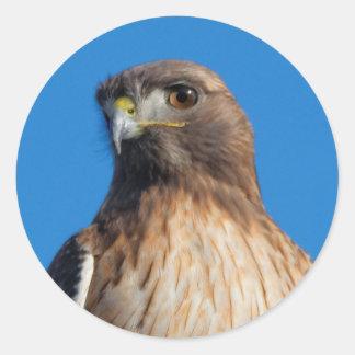 Rot-Angebundener Falke im Sun Runder Aufkleber