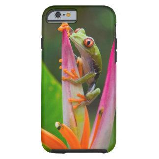 Rot-Auge Baumfrosch, Costa Rica 2 Tough iPhone 6 Hülle