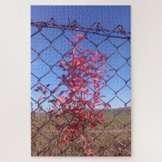 Rot-Blätter über dem Zaun