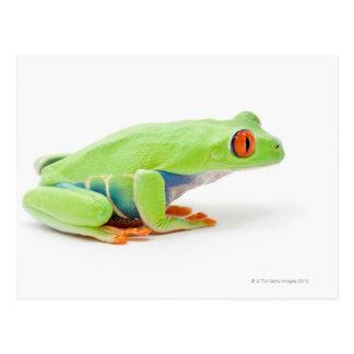 Rot-Mit Augen Baum-Frosch (Agalychnis Callidryas) Postkarte