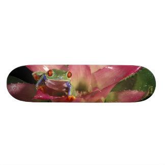 Rot-mit Augen Baumfrosch Agalychnis callidryas) 19,7 Cm Skateboard Deck