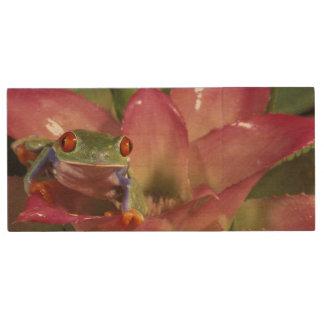 Rot-mit Augen Baumfrosch Agalychnis callidryas) Holz USB Stick