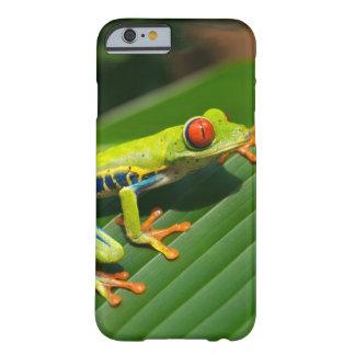 Rot-mit Augen Frosch Baum des tropischen Barely There iPhone 6 Hülle