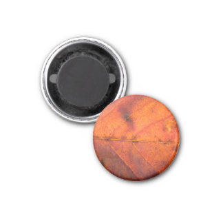 Rot-Orange Herbst-Blatt-Magnet Runder Magnet 2,5 Cm