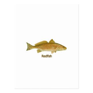 Rotbarsche (betitelt) postkarte