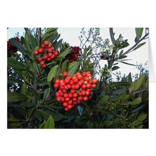 Rote Cotoneaster-Beeren:  Ferienzeit Grußkarte