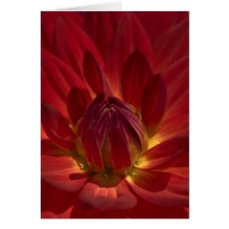 Rote Dahlien Blumen Einladungskarte