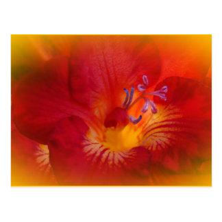 Rote Freesia-Blumen-Einzelteile Postkarte