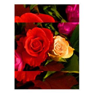 Rote gelbe Rose