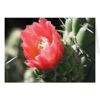 Rote Kaktus-Blume Karte