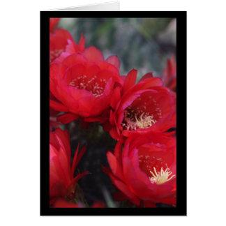 Rote Kaktusblüte Grußkarte