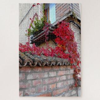 Rote laufende Pflanze und das Fenster