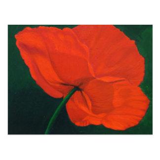 Rote Mohnblume Postkarte
