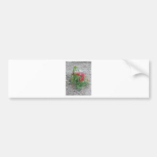 Rote Paprikaschoten, die an der Pflanze hängen Autoaufkleber
