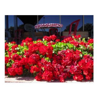 Rote Pelargonie-Café-Postkarte Postkarte
