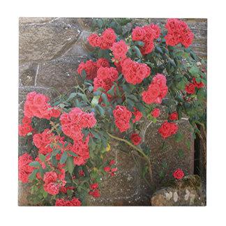 Rote Rosen, die auf Ziegelsteinwand, Spanien Fliese