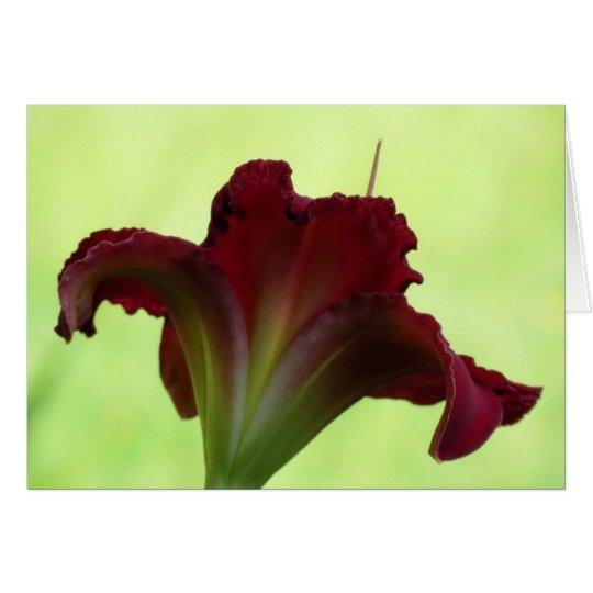 Rote Silhouette - Taglilie Grußkarte