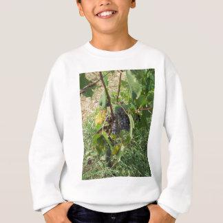 Rote Trauben in einem Weinberg Sweatshirt
