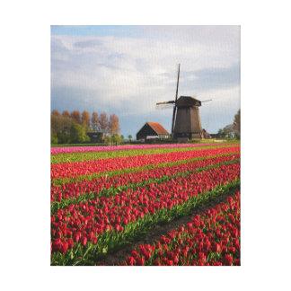 Rote Tulpen und eine Windmühle Leinwanddruck