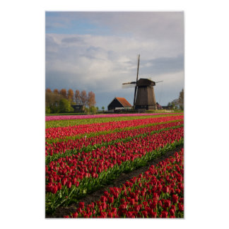 Rote Tulpen und eine Windmühle Poster