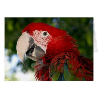 Rote und grüne Macaw-Gruß-Karten Karte