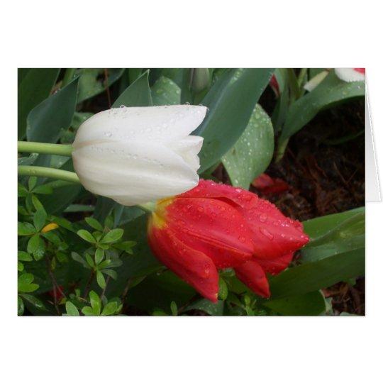 rote weiße Tulpekarte Grußkarte